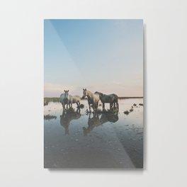Camargue Horse II Metal Print