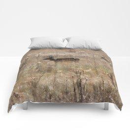 Autumn - Deer in Tennessee Comforters