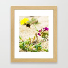 the flight of bumble bee on the bunes Framed Art Print