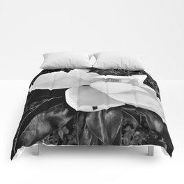 Magnolia Dreams Comforters