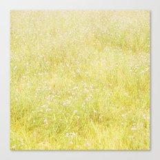 Sweet Light Wild Flowers Canvas Print