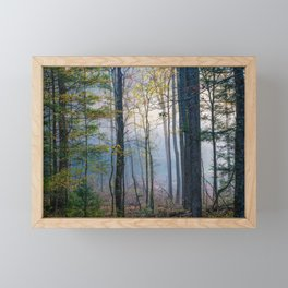 Mystic Forest - Early Morning Glow in Smoky Mountains Framed Mini Art Print