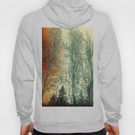 Autumn Poplars, Sunlight Dreaming About You Hoody