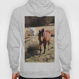 Two friendly horses Hoody