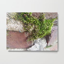 Moss the Sewer  Metal Print