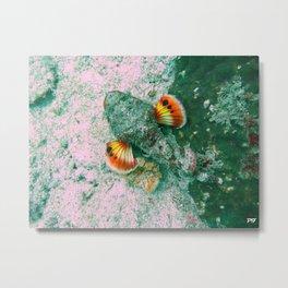 Flasher Scorpionfish Metal Print