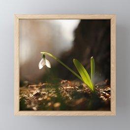 Light In Shade. Snowdrop Flower Bathing In Sun #decor #society6 Framed Mini Art Print