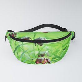 Chequered lily Fritillaria Meleagris Fanny Pack