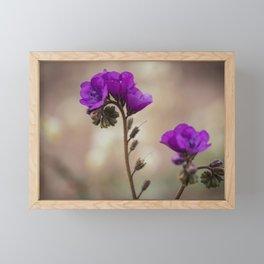 Purple flowers flourishing in the Death Valley Framed Mini Art Print