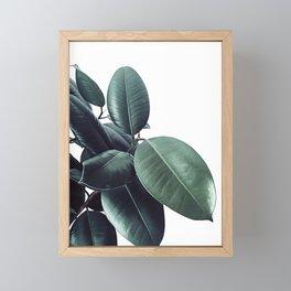 Ficus Elastica #18 #White #foliage #decor #art #society6 Framed Mini Art Print