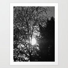 Trees at Sunset II Art Print