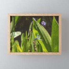 Great Blue Skimmer, No. 2 Framed Mini Art Print