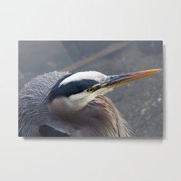 Alert Heron Metal Print