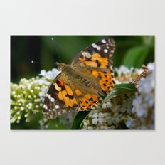 Time To Fly... Canvas Print