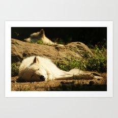 Sleeping white wolf in the summer sun Art Print