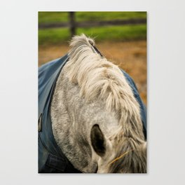 Grey Withers Canvas Print