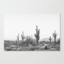 DESERT / Scottsdale, Arizona Canvas Print
