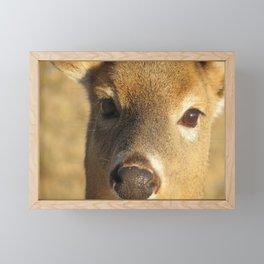 WHITE TAIL DEER (1 of 3) - CLOSEUP OF FACE Framed Mini Art Print