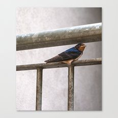 One Swallow Doesn't Make a Summer Canvas Print