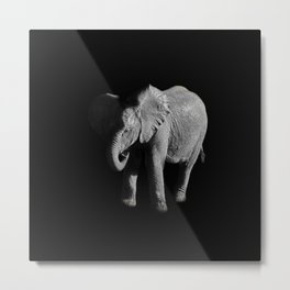Baby African Elephant Metal Print