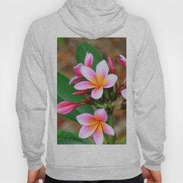 Plumeria Floral Art - Tropical Queen - Sharon Cummings Hoody
