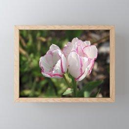 Tulip - White & Pink duo Framed Mini Art Print