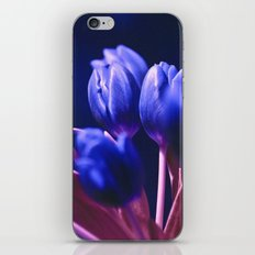 Blue Poetry of Tulips iPhone & iPod Skin
