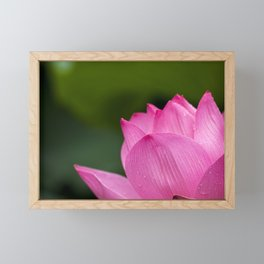Lotus Pink Nature Framed Mini Art Print