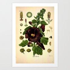 Botanical Print: Mallows / Malvaceae Art Print