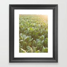 high quality photo, Colors of sunset - chards, high quality print, fine art print, still life, macro Framed Art Print