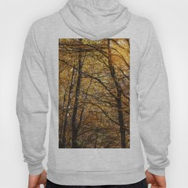 Forest in Autumn time Hoody