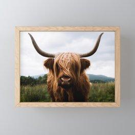 Scottish Highland Cattle in Scotland Portrait II Framed Mini Art Print