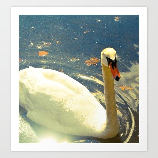 Swan Shine Art Print