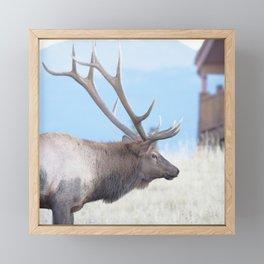 Watercolor Elk Bull 47 Framed Mini Art Print