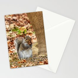 Hungry Squirrel Stationery Cards