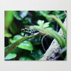 Imitator Dart Frog Canvas Print