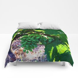 Grapes of Wrath Comforters