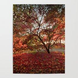 Japanece Maple Poster