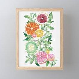 Citrus Fruit Framed Mini Art Print
