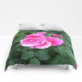 Pink Rose Comforters