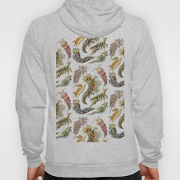 Ernst Haeckel - Nudibranchia (Snails) Hoody