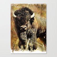 Rustic Buffalo Canvas Print