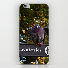 Pigeons in London   iPhone & iPod Skin