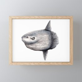 Ocean Sunfish (Mola mola) Framed Mini Art Print