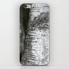 birches II iPhone & iPod Skin