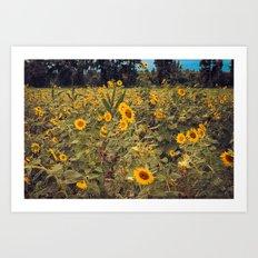 Summer Dance Field of Sun Flowers Botanical Landscape Fine Art Print Art Print