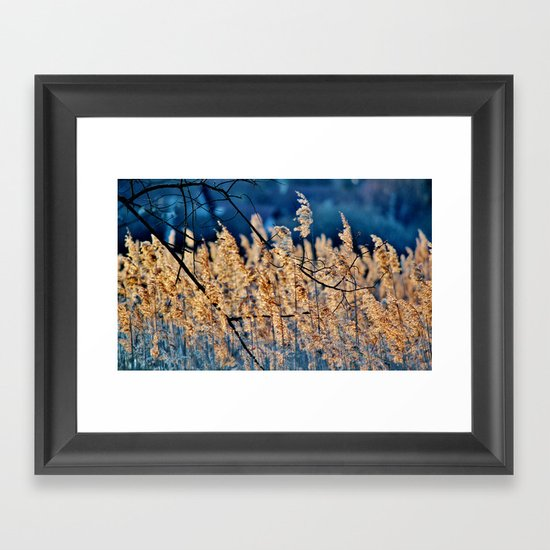 My blue reed dream - photography Framed Art Print