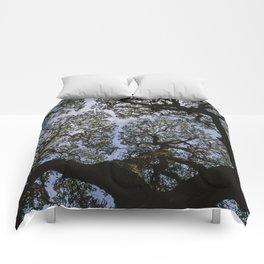 Oak Tree Reaching For The Sky Comforters