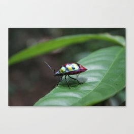 Bug Rainbow Canvas Print