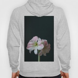 The Amaryllis Hoody